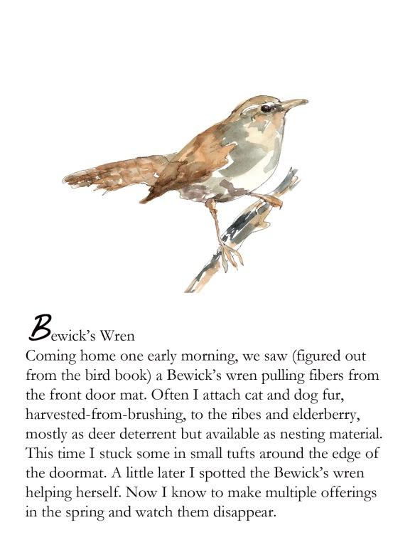 Bird FB Bewick's wren p. 5