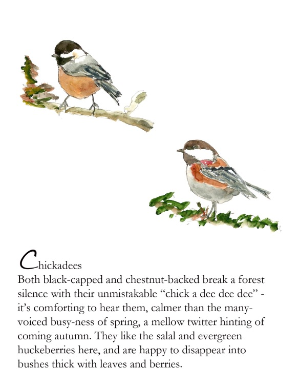 Bird FB Chickadees -2