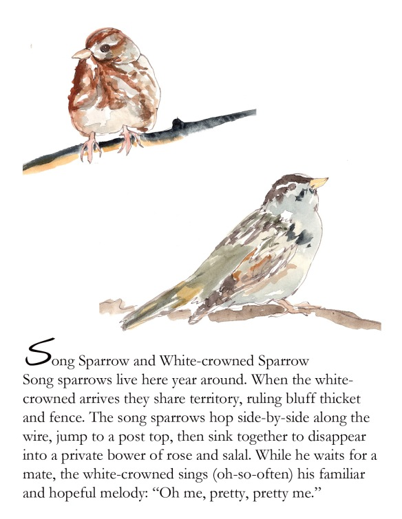 Bird FB sparrows p. 4