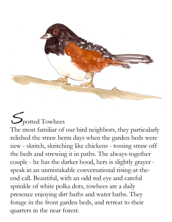 Bird FB Spotted Towhee p. 6