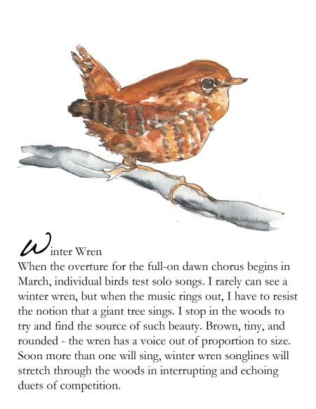 Bird FB winter wren