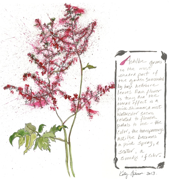 garden notes astilbe
