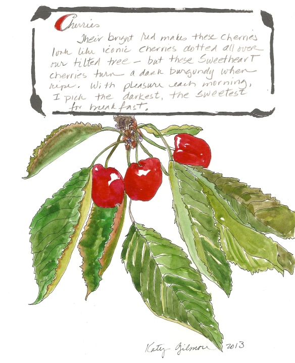 garden notes cherries