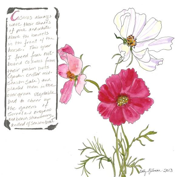 garden notes cosmos