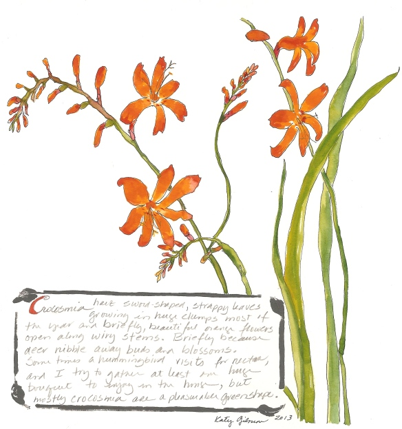garden notes crocosmia