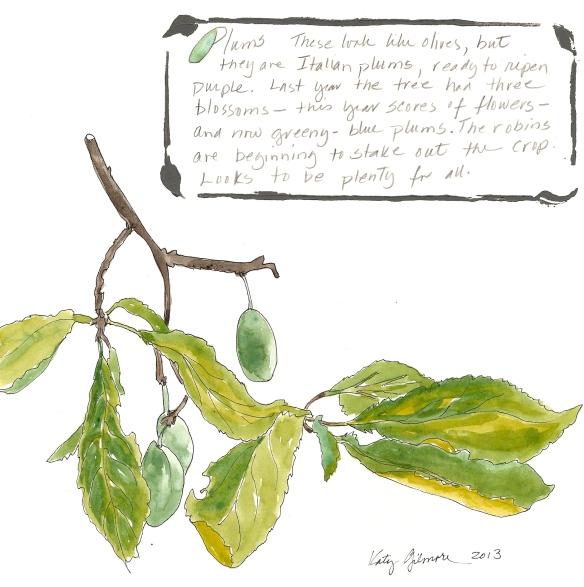 garden notes plums
