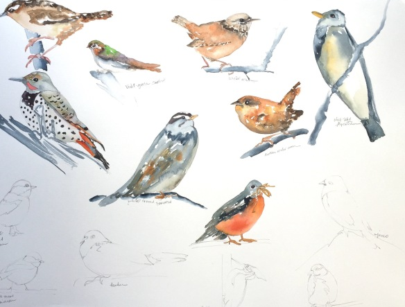 Bird Study - neighbors