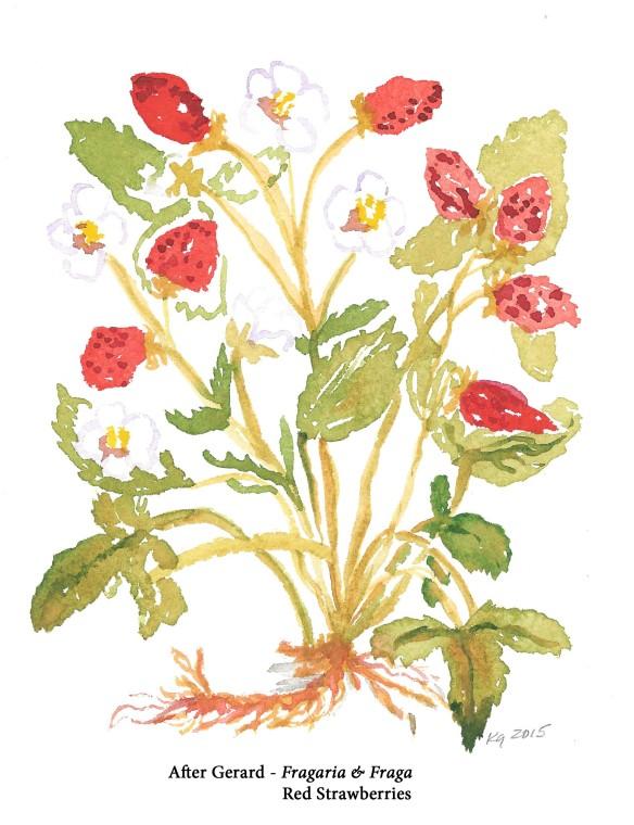 Gerard - strawberries