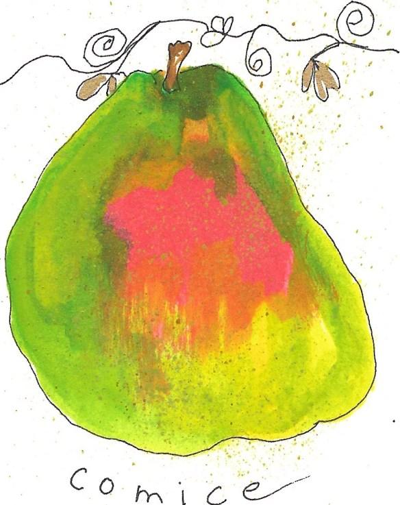 pears-comice-2-copy